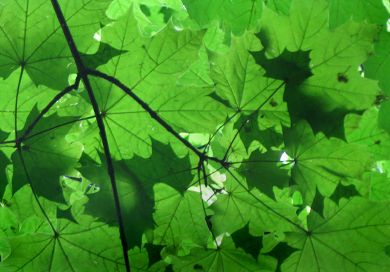 Patterns of light through green leaves